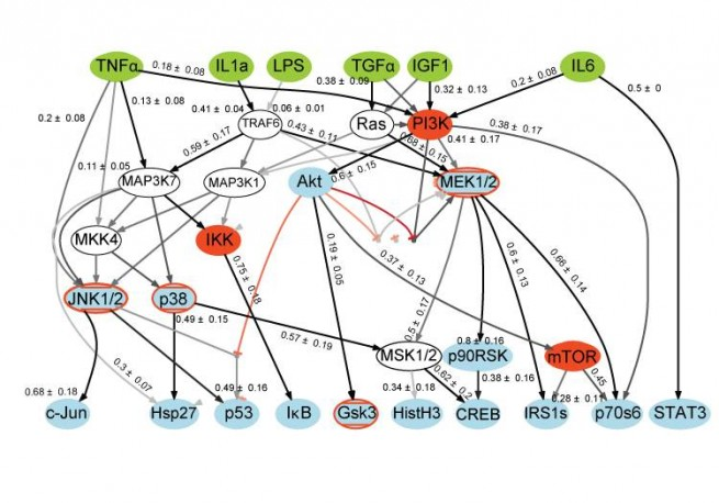 Signaling pathway inferred from LINCS-style data